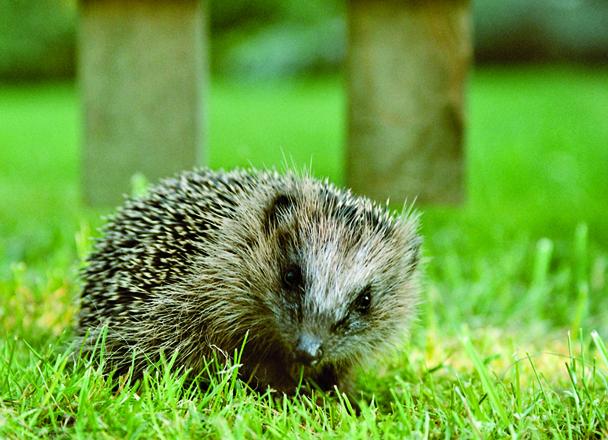 Verantwortungsvoller Umgang mit Wildtieren