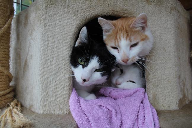 Katzen im Katzenbaum