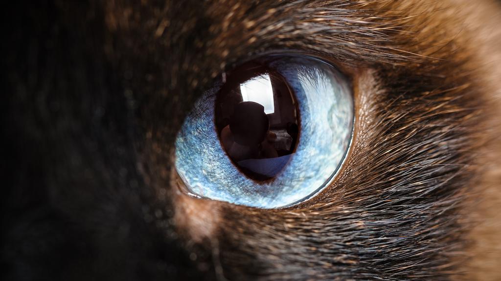 Die Augen unserer Heimtiere
