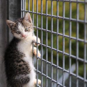 Katzenbabies   Vorarlberger Tierschutzheim