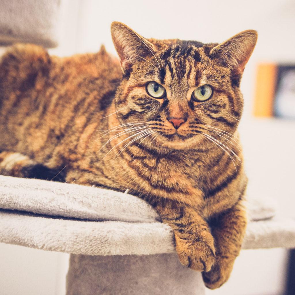 Für Haustiere sorgen während der Coronakrise